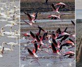 Su Kuşlarının Korunması İçin Ekolojik Bilinçlenme Şart